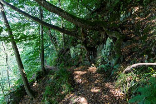 Verwunschene Wälder im Harz. | © Andreas Levi