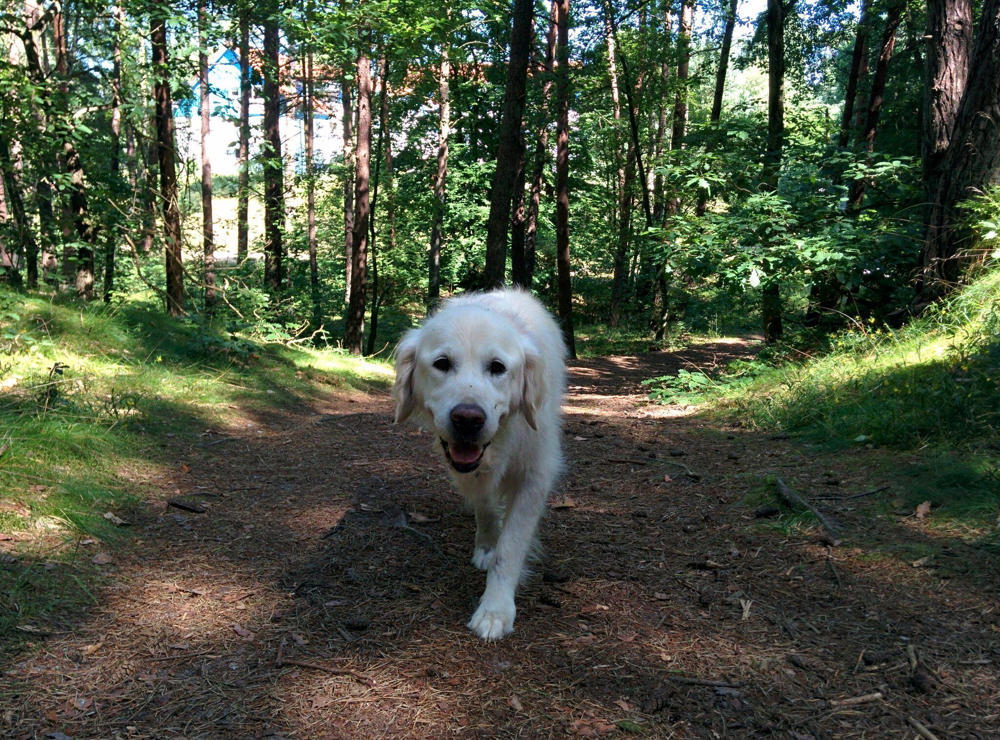 Reisetipps für den unbeschwerten Urlaub mit Hund