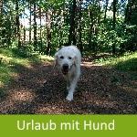 Urlaub mi Hund im Harz
